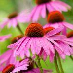 Mal de gorge: 10 meilleurs remèdes naturels efficaces et rapides