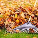 8 travaux d'automne pour jardinier paresseux