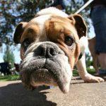 Maladies animales: Méfiez-vous des zoonoses!