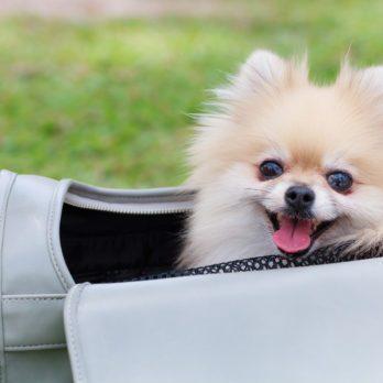 Guide pour les propriétaires d'animaux qui partent en vacances