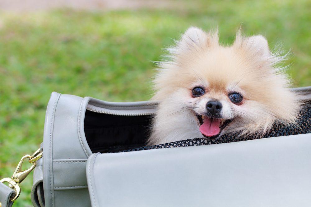 Les meilleurs conseils pour faire garder votre animal de compagnie durant vos vacances.