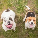 Comment élever votre chien: les meilleurs conseils