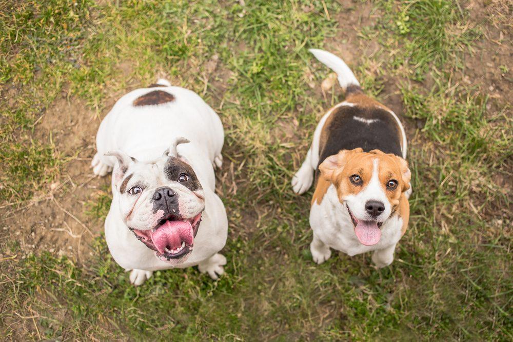 Les meilleurs conseils pour élever votre chien.