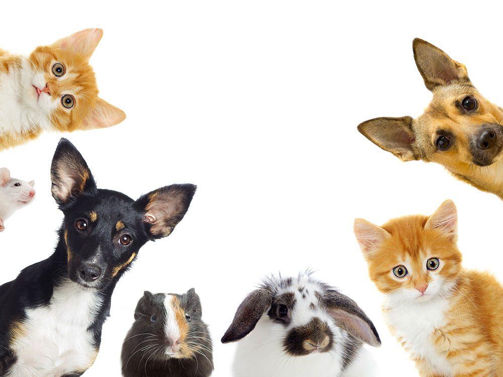 Renseignez-vous auprès de votre vétérinaire sur tous les aspects concernant la santé et le comportement de vos animaux de compagnie.