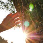Prendre soin de ses arbres