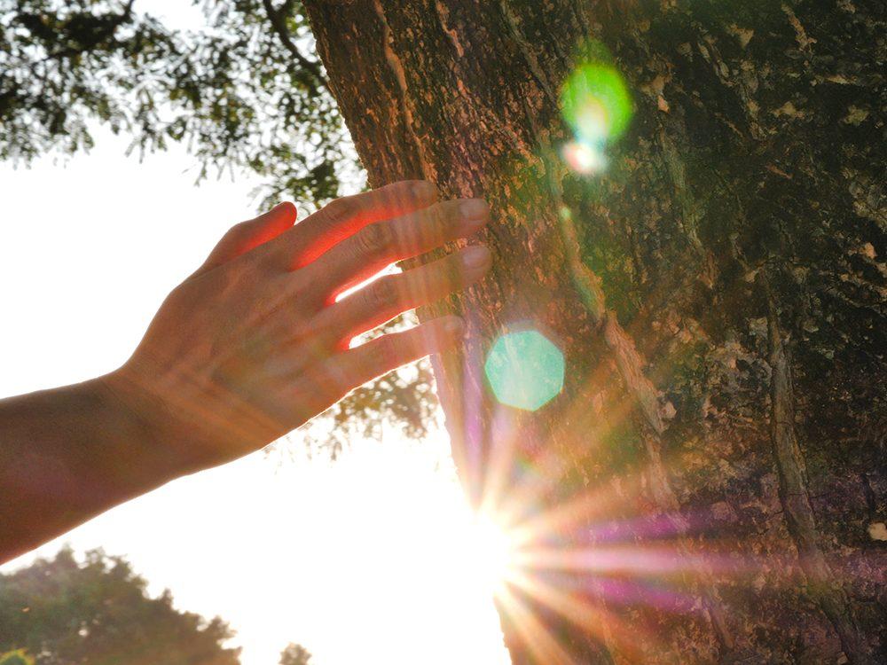 Inspectez régulièrement vos arbres.