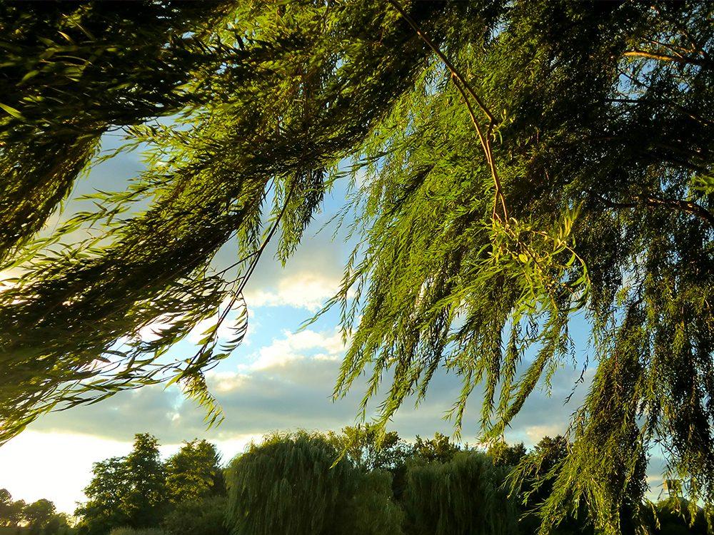 Quand le vent abîme les arbres.
