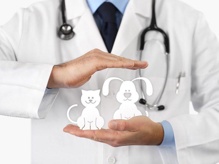 Pensez à une assurance santé pour votre animal.