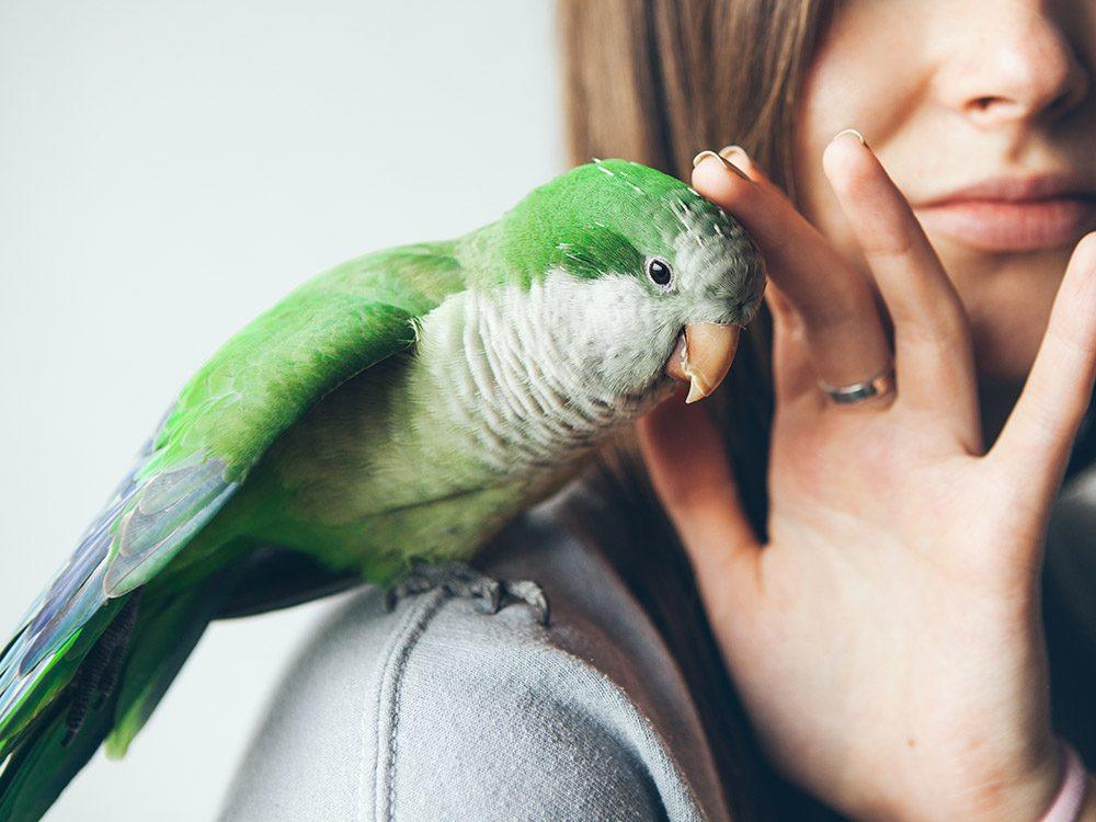 Blague sur les animaux de compagnie: la femme qui s'acheta un perroquet.