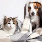 9 blagues amusantes sur les animaux de compagnie