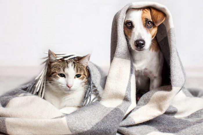 Blagues sur les animaux de compagnie.