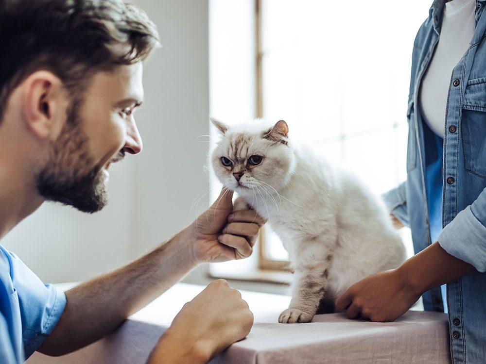 Recherchez un vétérinaire qui communique bien et qui compatit.