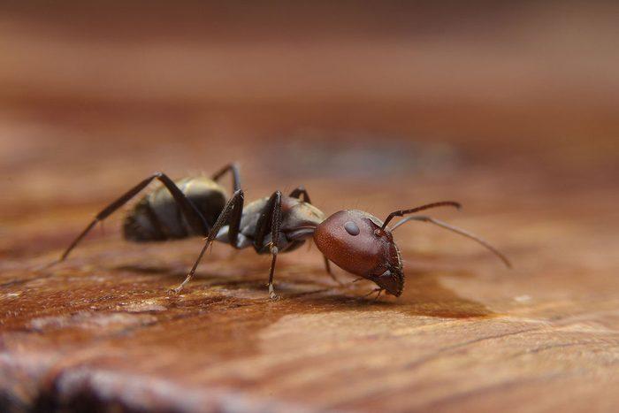 Le citron peut remplacer l'insecticide pour éloigner les insectes.
