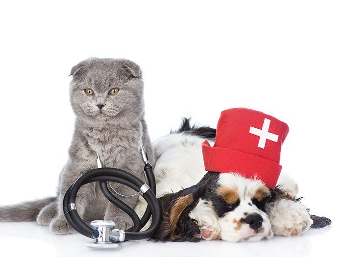 Connaissez-vous tous les services qu'offre votre clinique vétérinaire?