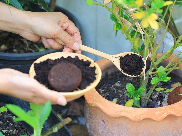 Utiliser le marc de café pour fertiliser les plantes.