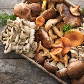 5 bonnes raisons de consommer des champignons