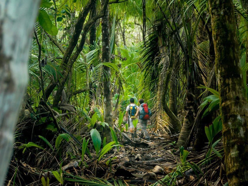 Situé dans la péninsule de Osa, sur le versant pacifique du Costa Rica, ce parc national offre une forêt tropicale magnifique.