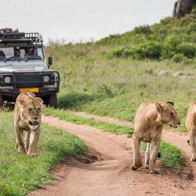 Le parc national du Serengeti comporte un certain nombre de parcs animaliers et de réserves naturelles en Tanzanie.