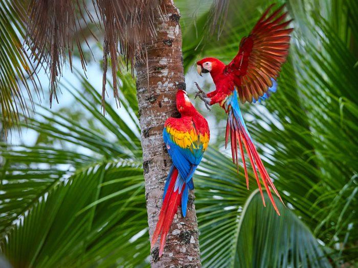 Très populaire auprès des ornithophiles, avec un relais écologiques qui permettent aux visiteurs de pénétrer dans la jungle.