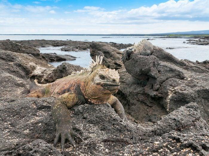 Longtemps protégées contre les interférences des milieux environnants, on y trouve un trésor incroyable d'animaux uniques au monde.