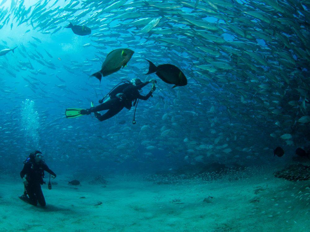 Riche en nutriments, la mer de Cortez attire une vaste gamme d'animaux marins.