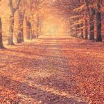 10 films à revoir qui nous font aimer l'automne