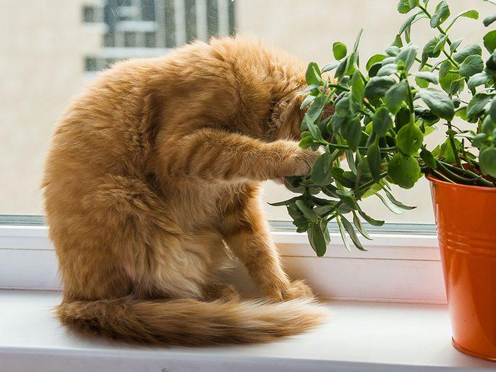 Un animal qui mange des feuilles est un animal malade.