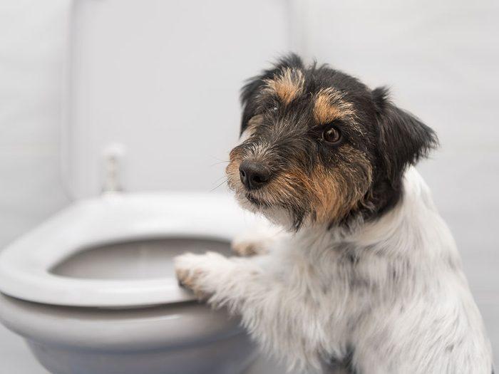 Comment savoir si mon animal est malade: il a des problèmes de diarrhée.