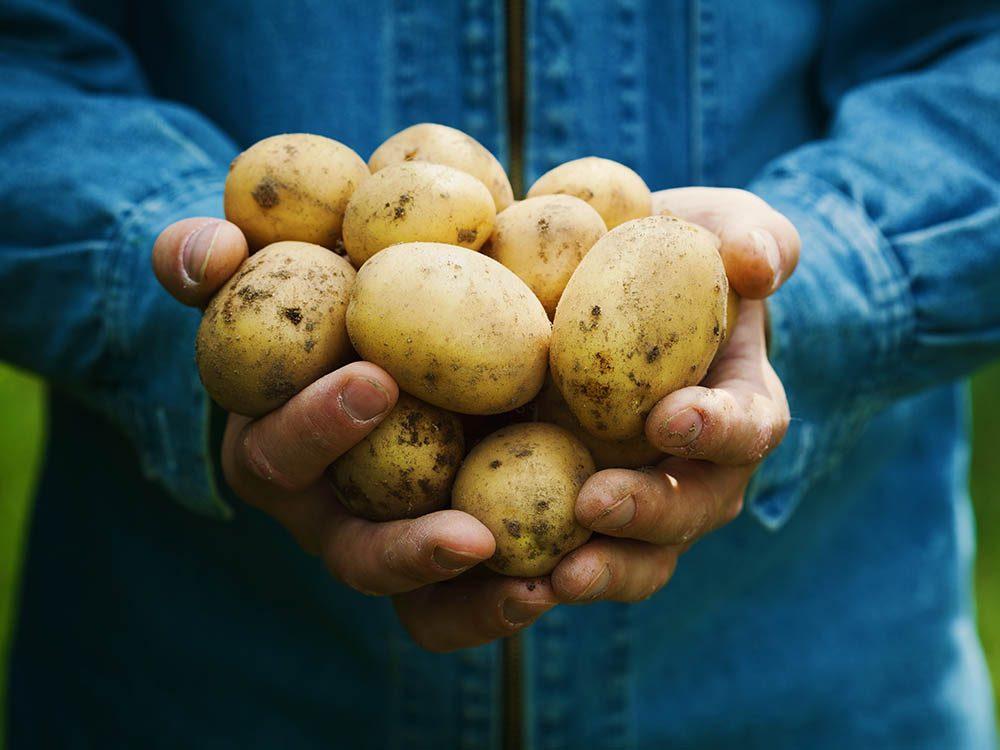 Musée du Canada: visitez un musée entièrement dédié à la pomme de terre.