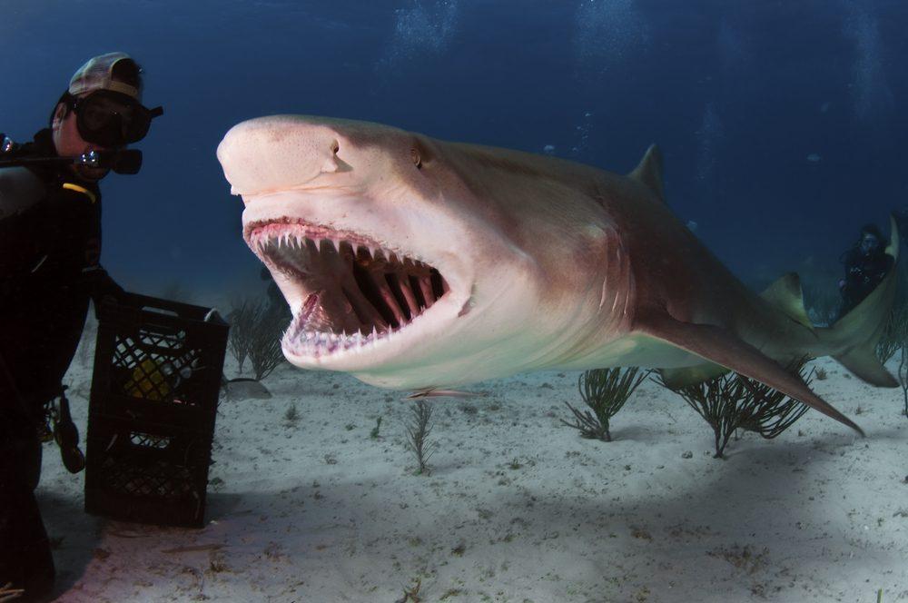 Image result for plongée avec les requins en equateur