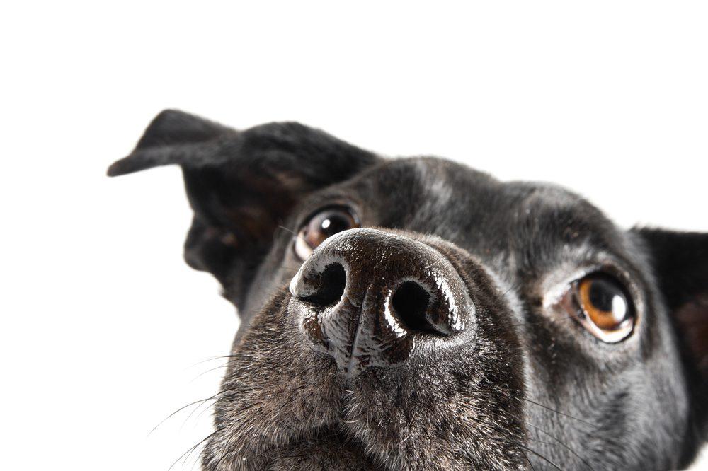 Chaque chien a un museau unique!