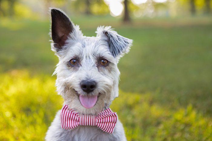 Les propriétaires de chiens de garde n'auraient pas de traits de personnalité en particulier.