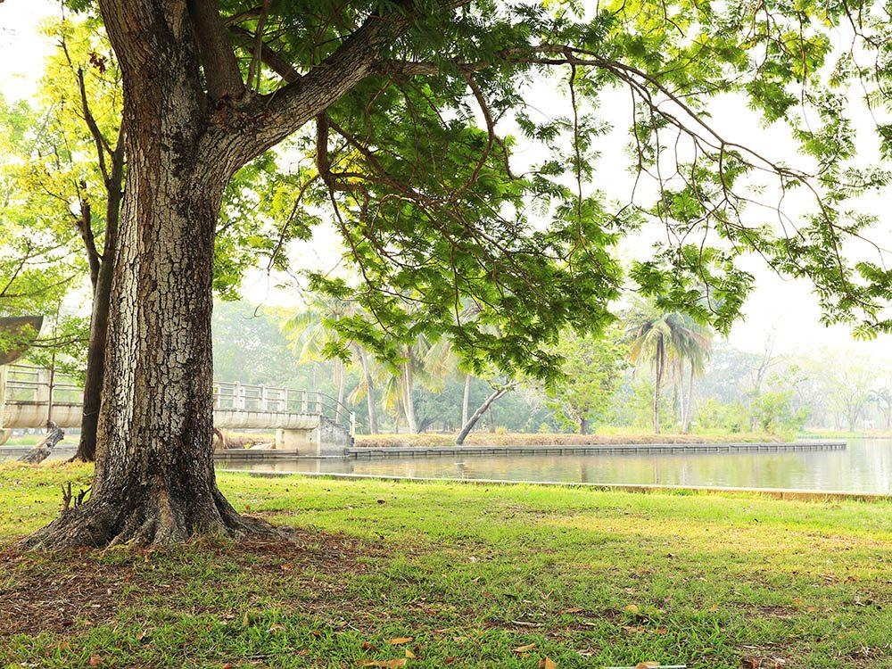 La pelouse peut être abîmée sous les arbres.