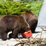 Les pires erreurs à éviter en camping