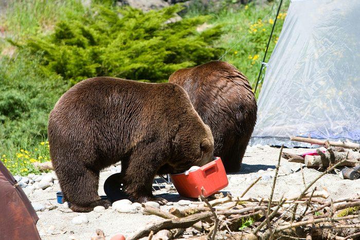Les pires erreurs à ne jamais faire en camping.