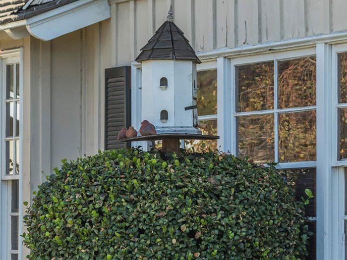 Les buissons trop près de la maison mettent en danger la sécurité de la maison.