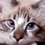 Votre chat est-il malade? 6 symptômes et signaux d'alarme à vérifier