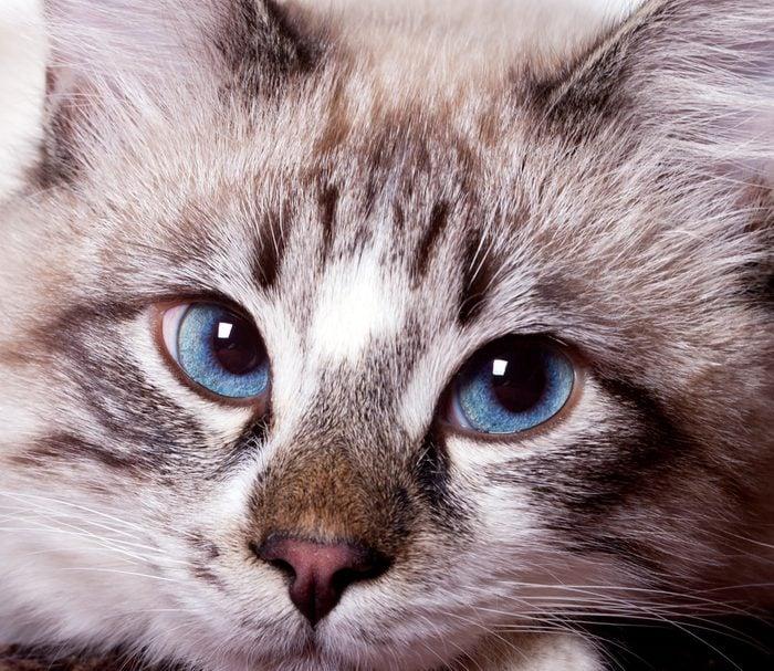 Votre chat est-il malade? Voici les principaux symptômes à surveiller.