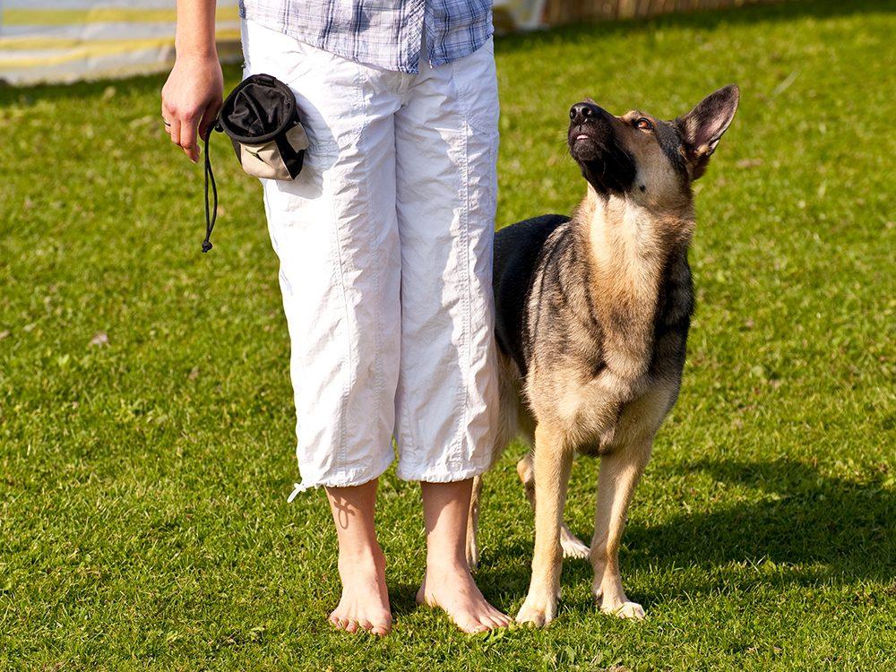 Dresser son chien pour éviter les problèmes de comportement.