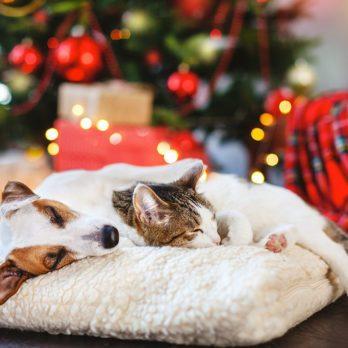 Comment préparer vos animaux de compagnie pour les fêtes