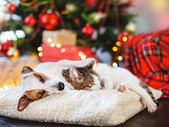 Aménagez un endroit sûr pour vos animaux de compagnie et prévoyez un plan B.