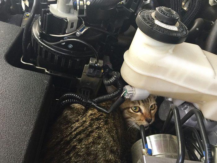 Vérifiez votre voiture chaque matin pour la sécurité de votre chat, ou d'un autre chat, en hiver.