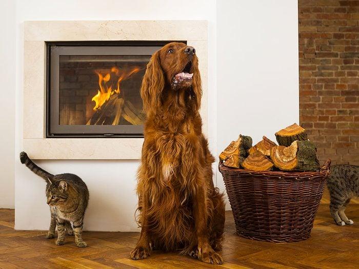 Protégez votre foyer pour la sécurité de vos animaux en hiver.