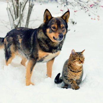 10 conseils de sécurité pour vos animaux en hiver