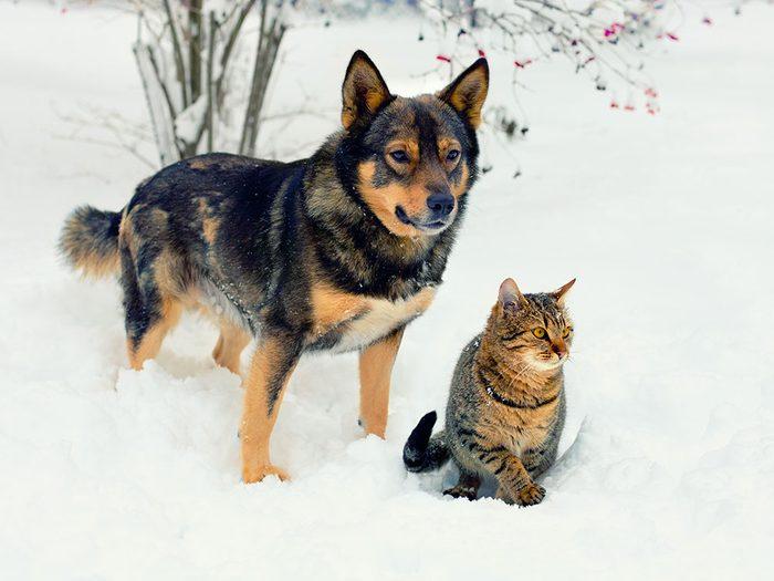 Conseils de sécurité pour vos animaux en hiver.
