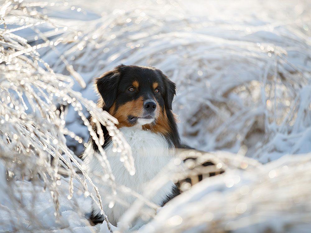 La sécurité de votre animal est importante en hiver aussi.