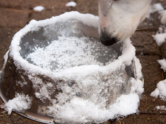 Pour sa sécurité, gardez l'oeil sur son bol d'eau en hiver.