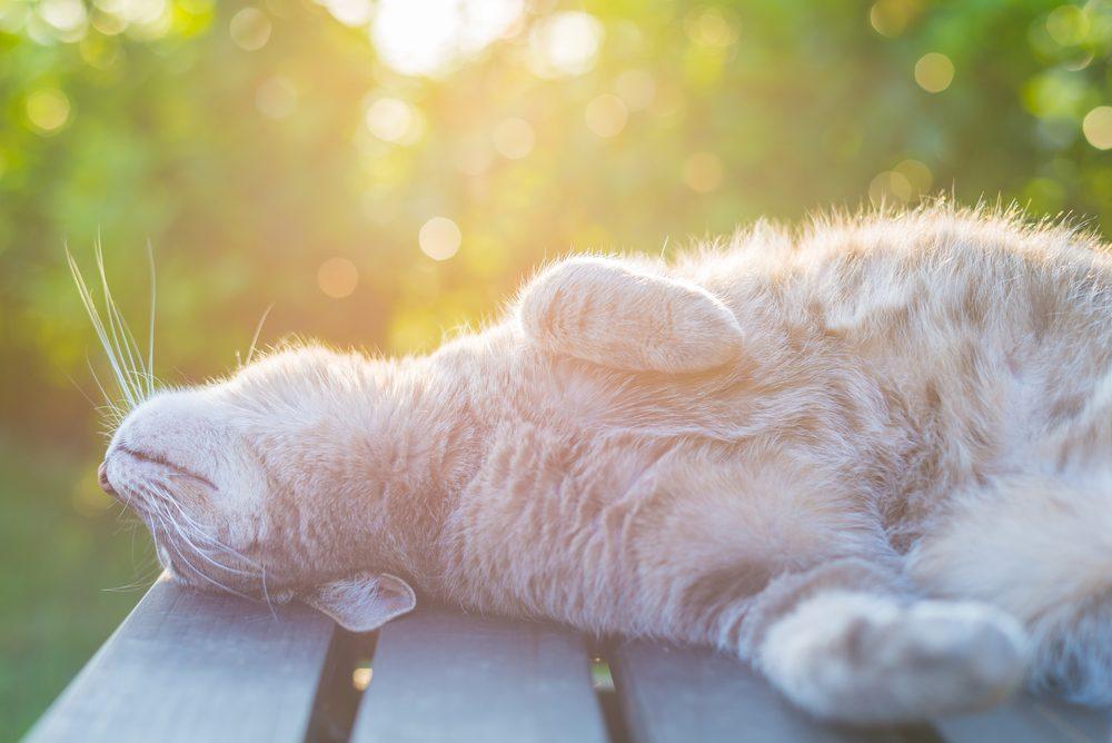 Les chats se lèchent pour relaxer.