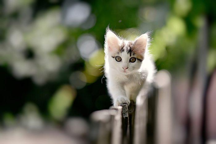 Les chats se lèchent pour se protéger des prédateurs.