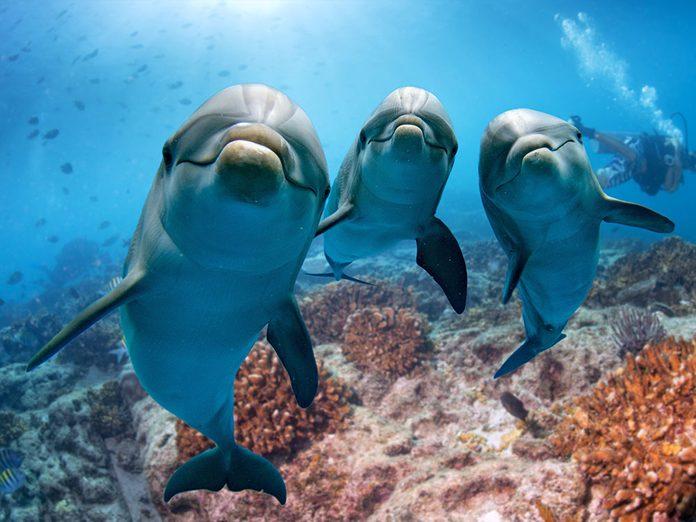 Faits insolites: le dauphin voit au moyen de sons.
